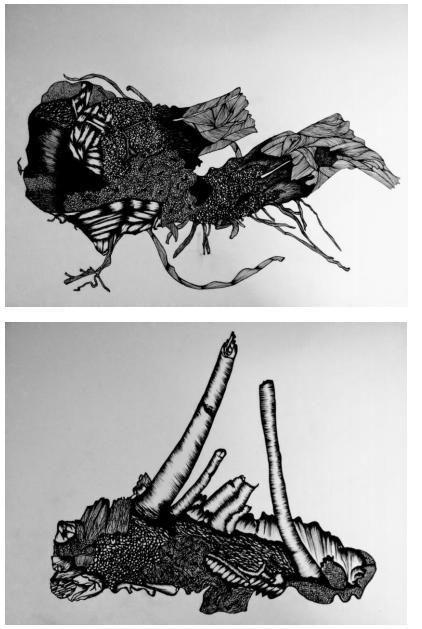 Edson Macalini - Arqueologias Afetivas Desenhos de Raízes Cepas de Uvas em nanquim - A3